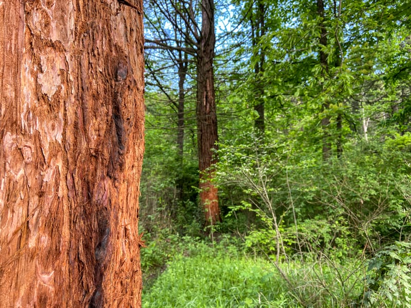 Ijevan Dendropark: A Must-Visit Arboretum in Ijevan