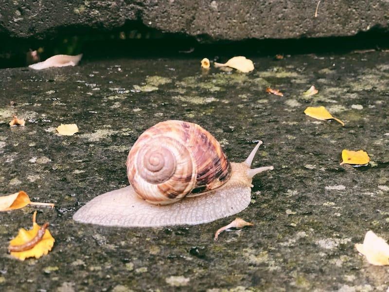Hotel Mirhav snail in garden