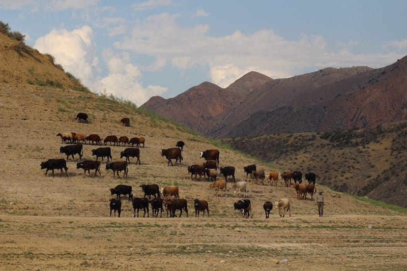 Azat Reservoir: Quick Travel Guide to an Unassuming Place