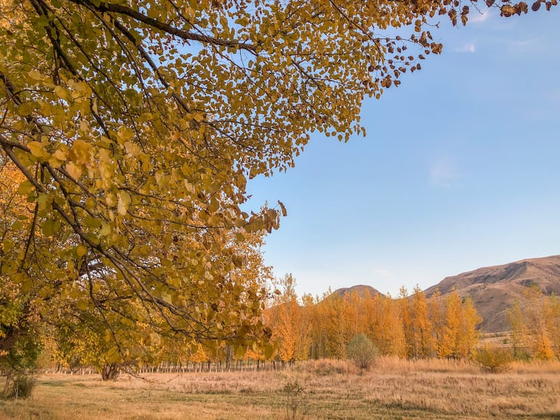 On the road to Jermuk in autumn