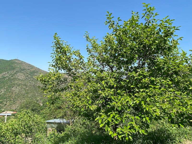 Bekh Hilltop