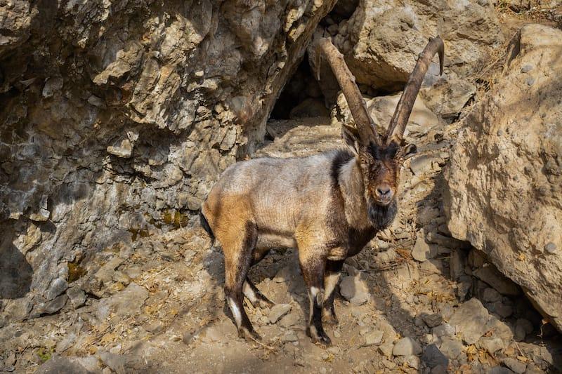 Tanzatap Wildlife Watch Point-12