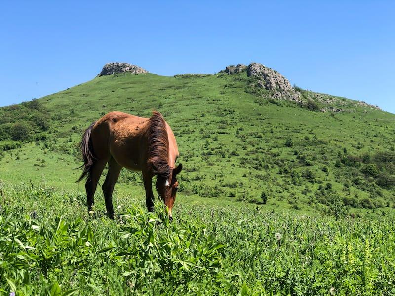 Tandzaver Horseriding-4